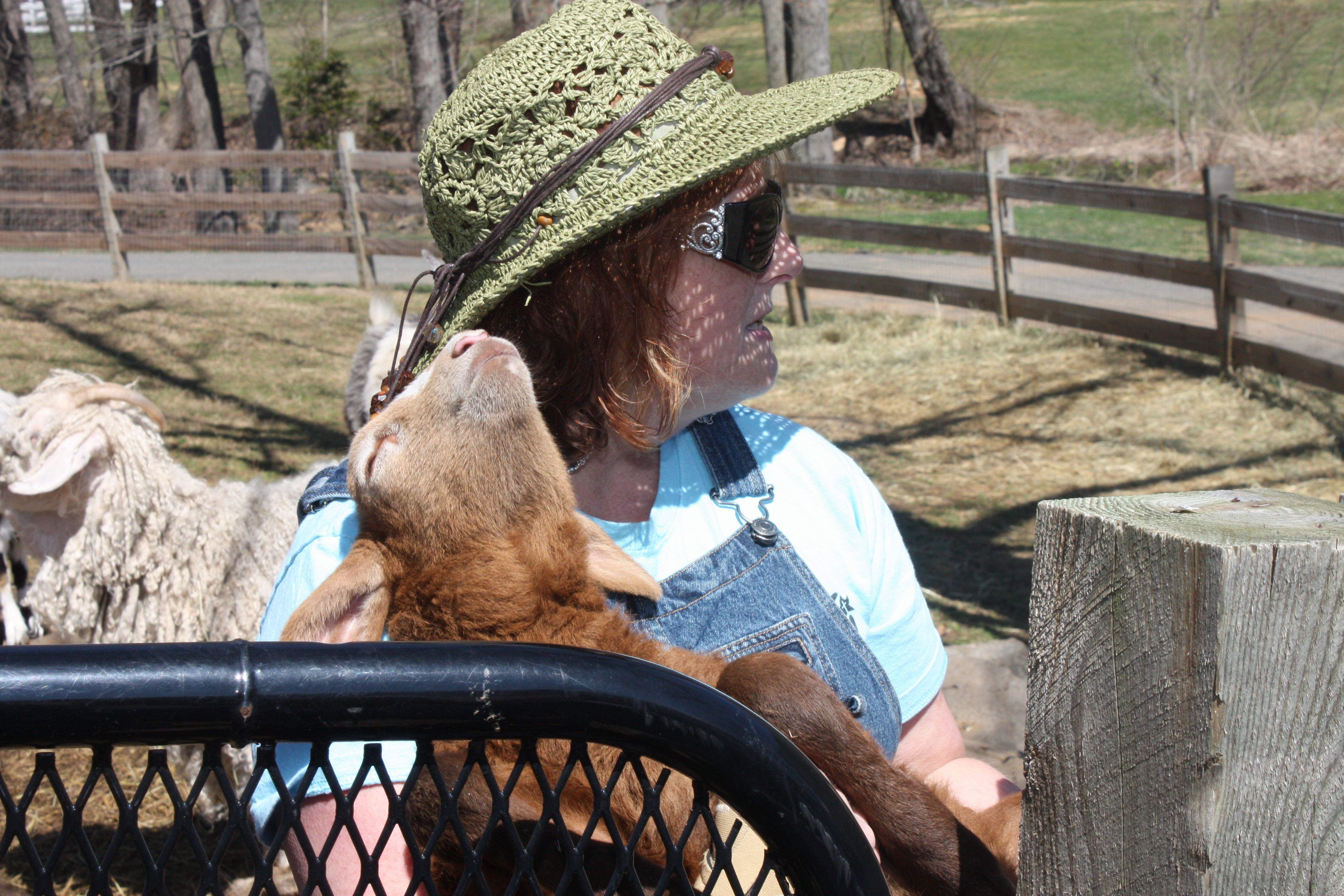 brown lamb